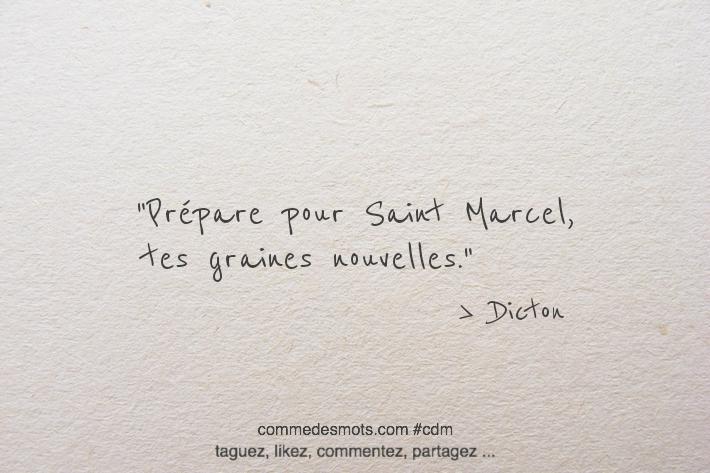 Prépare pour Saint Marcel, tes graines nouvelles