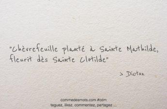 Chèvrefeuille planté à Sainte Mathilde, fleurit dès Sainte Clotilde.